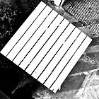 Plant, Table, Mat, Stone   (please view enlarged ...) by Scott Johnson
