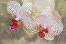 Orchid by KBritt