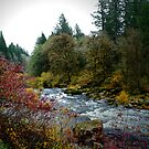 Fall On The Siuslaw River by Charles & Patricia   Harkins ~ Picture Oregon