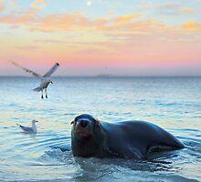 Sammy the Seal by Adam Gormley