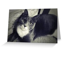 Russian Blue cross Greeting Card