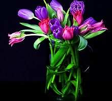 Colorful tulips  by torishaa