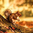 Squirrel in the park by Jose Vazquez
