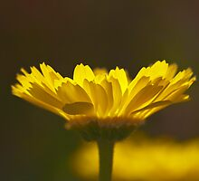 Yellow Lumen by Richard G Witham