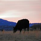 Sunset Cow by Betty E Duncan © Blue Mountain Blessings Photography