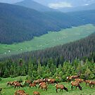 Elk Highlands by Robert Meyers-Lussier