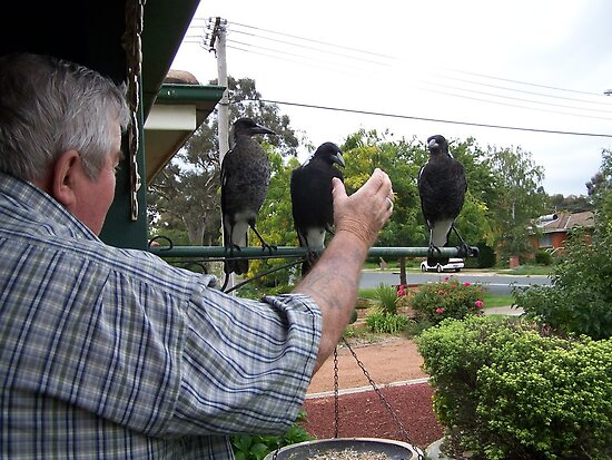 Me and the juvenile magpies. by shortshooter-Al