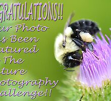 Nature Photography Challenge Banner by William Brennan