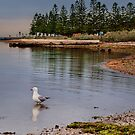 The Lone Seagull by Kris Montgomery