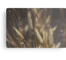 The Answer is Blowing in the Wind. Metal Print