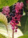 Fascinating Plant by lynn carter