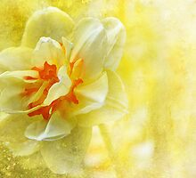 Lemon Yellow Daffodil  by Elaine  Manley