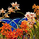 USA. Philadelphia Flower Show 2012. Orchids. by vadim19