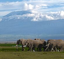 Kilomanjaro and Elephants by Linda Sparks