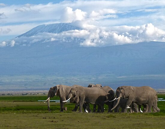 Kilomanjaro and Elephants by Linda Sparks