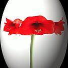 Easter Amaryllis by missmoneypenny