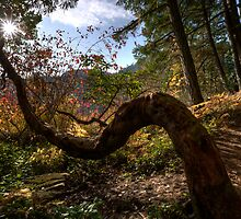 Reaching for the Star by Don Guindon