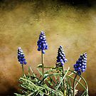 Wild Blue Bells by Rick  Friedle