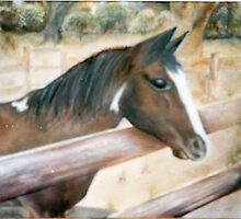 Karen's Horse         Oil on Canvas   18x24 by geri jones