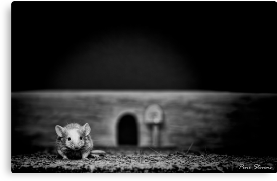The Mouse by Pene Stevens