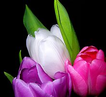 Tulip Trio by DottieDees