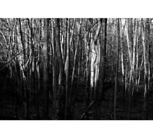 In the Half Light Photographic Print