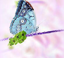 Springtime... by LindaR