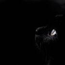 Black beauty by Laura Melis