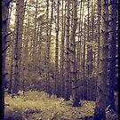 Tall trees by LocustFurnace