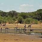 Hwange magic by Dan MacKenzie