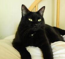 Zoe Black Cat 5 with White Oath Medallion by chloekat
