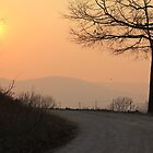 Apricot Silhouette by Carolyn Wright