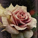 Fantaisie Rose by Karen Lewis