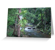 currumbin valley ... Greeting Card