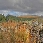 Dry Stone Wall by seanduffy
