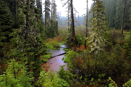 High Cascades Bog by Charles & Patricia   Harkins ~ Picture Oregon