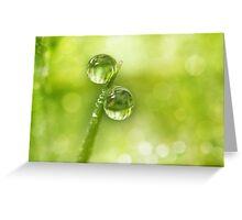 Dew Drop Green Greeting Card