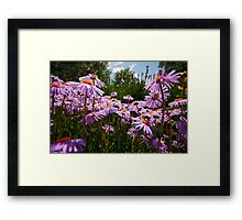 do you see the bumble bee? Framed Print