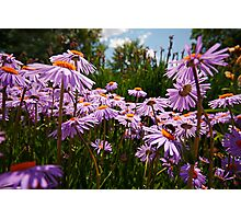 do you see the bumble bee? Photographic Print