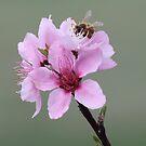 Bee-lieve by katpartridge