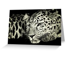 Zane....Amur Leopard Greeting Card