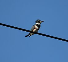 Bird on a wire by Larry Baker