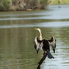 Cormorant Drying by GP1746