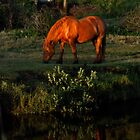 Grazing by ZWC Photography