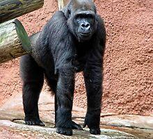 Gorilla by Carolyn  Fletcher