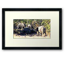 elephant mud bath Framed Print