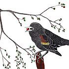 Red-Winged Blackbird by Sarah Carver