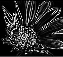 *Daisy Drama in Black* by DeeZ (D L Honeycutt)