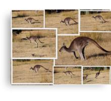 Kangaroos  Hopping Canvas Print