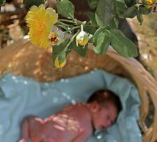 Peering through the Rose Bush by photosbybec